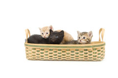 Three kittens in a basket Royalty Free Stock Photography