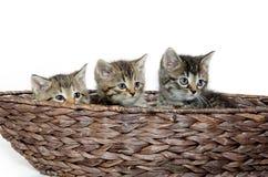 Three kittens in basket Stock Photo