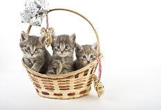 Three kittens in basket Royalty Free Stock Photo