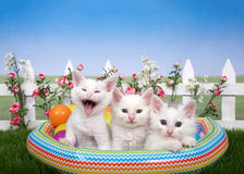 Three kittens in a blow up pool in back yard setting Royalty Free Stock Image