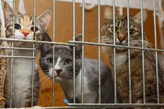 Three kittens in a cage Stock Photo