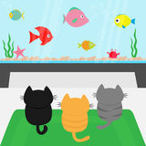 Three kittens on carpet rug looking to big aquarium with fish set. Little cat family.. Three kittens on carpet rug looking to big aquarium with fish set Royalty Free Stock Photo