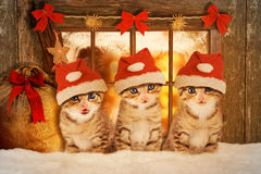 Three kittens at Christmas sitting in front of a window. Stock Image