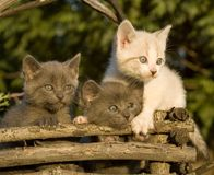 Three Kittens Close Royalty Free Stock Photos