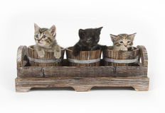 Three kittens in  flower pots Stock Photo