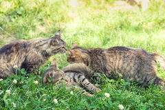 Three kittens on the grass stock photography