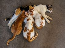 Three kittens and mother cat on the floor royalty free stock photo