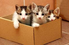 Three kittens in the paper box stock image