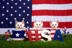 Three kittens in patriotic pots USA blocks Flag background. Three fluffy white small kittens sitting in patriotic designed pots on green grass, American flag in royalty free stock photography