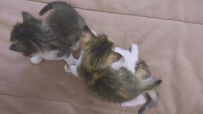 Three kittens are played on the couch slow motion video. kitten playing concept two kittens and a cat lifestyle. Three kittens are played on couch slow motion stock footage