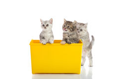 Three kittens playing in yellow box Stock Photos