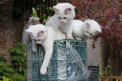 Three Kittens on Roll of Garden Fencing Royalty Free Stock Image