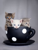 Three kittens sitting in large cup. Three cute kittens sitting in large cup stock photo