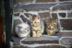 Three kittens sitting on the steps. Young kittens sitting. Friendship, community concept Stock Image