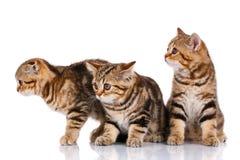 Three kittens sitting on a white background Stock Photo