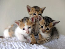Three kittens Stock Photos