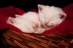 Three kittens sleeping in a basket Stock Images