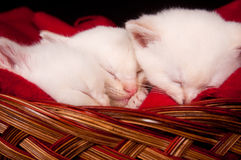 Three kittens sleeping in a basket Royalty Free Stock Image
