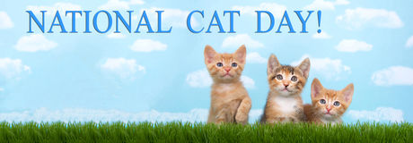 Three kittens in tall grass with blue sky background white fluff. Y clouds. Looking forward. Banner format sized for popular social media. National cat day is Stock Photo