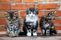 Three kittens on wall background Stock Photo