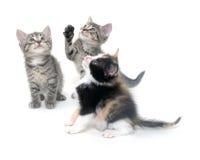 Three kittens on white Royalty Free Stock Photos