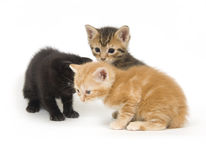 Three kittens on white Stock Photos