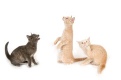 Three kittens on a white background Stock Images