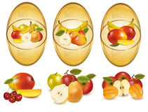 Three labels with different sorts of fruit. Vector Stock Image