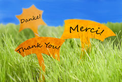 Three Labels With Thank You In Different Languages And Blue Sky. Three Labels With German Text Danke And French Text Merci Which Means Thank You On Sunny Green Royalty Free Stock Image