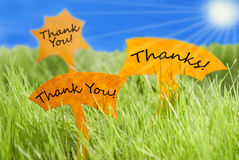 Three Labels With Thank You And Thanks And Blue Sky And Sun. Three Labels With English Text Thank You And Thanks On Sunny Green Grass For Spring Or Summer royalty free stock image
