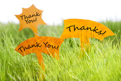 Three Labels With Thank You And Thanks On Grass. Three Labels With English Text Thank You And Thanks On Sunny Green Grass For Spring Or Summer Feeling stock images
