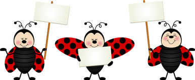 Three ladybirds with signboards Royalty Free Stock Photography