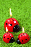 Three ladybug Stock Photo