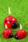 Three ladybug Stock Photo