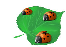Three ladybugs Stock Photo