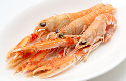 Three langoustines in porcelain plate Royalty Free Stock Image