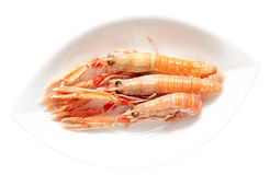 Three langoustines in porcelain plate Royalty Free Stock Photography