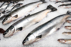 Three large fresh salmon. Lie on the counter in the ice Stock Photos