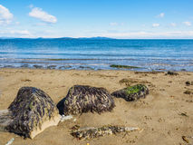 Three large rocks covered in seaweed on  sandy ocean beach. Three large rocks covered in seaweed on a sandy ocean beach Royalty Free Stock Photo
