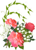 Three large roses and green plant curl Stock Photo