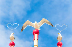 Three large seagulls. Three large seagull sitting on a wooden post. A seagull flaps its wings. Above the two other gulls hovering a cloud in heart shape Stock Image