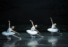 Three large Swan-The Swan Lakeside-ballet Swan Lake. In December 20, 2014, Russia's St Petersburg Ballet Theater in Jiangxi Nanchang performing ballet Swan Lake Stock Photography