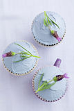Three lavender cupcakes Royalty Free Stock Photo