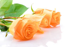Three laying orange roses Royalty Free Stock Photo