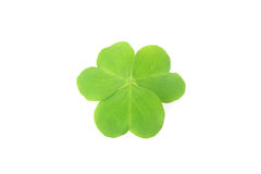 Three leaf clover Royalty Free Stock Image