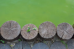 Three leaf clover on a wooden log next to waterbody Stock Image