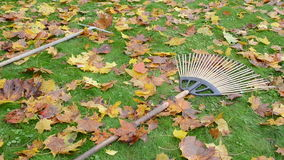 Three leaf rake tool lie meadow grass covered leaves worker take stock footage