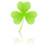 Three-leafed clover Royalty Free Stock Photo