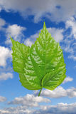 Three leafs. Isolated on sky Stock Images