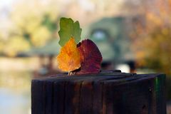 Three leaves in the autumn composition royalty free stock images
